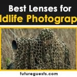 Best Lenses for Wildlife Photography (2021)   Buyers Guide