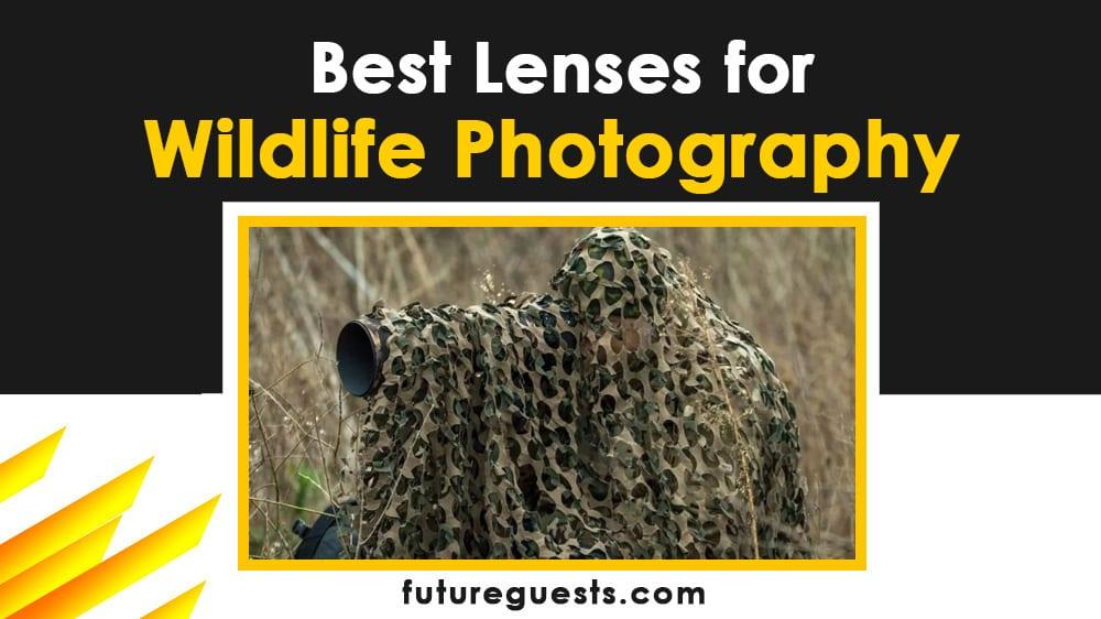 best lenses for wildlife photography - Canon Nikon